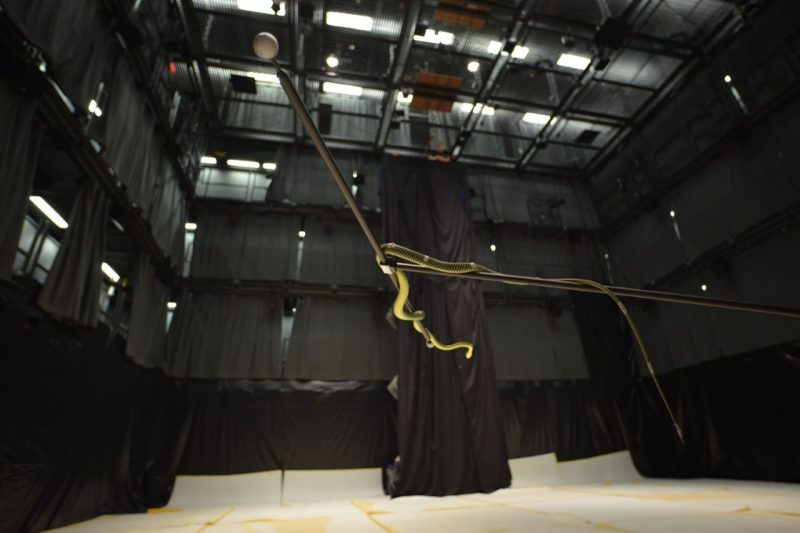 "Picture of a snake flying through ""The Cube"" - home to a 23-camera motion capture system. Photo by Jake Socha."