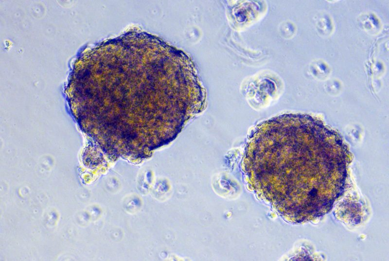 Image of cells