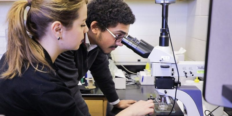 A BEAM undergrad peers through a microscope while his partner prepares slides for observation